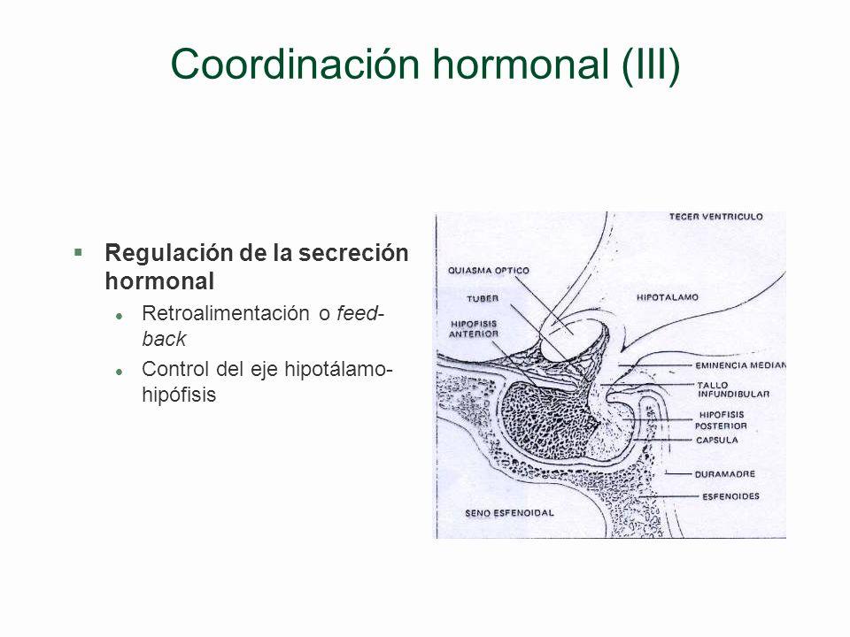 Coordinación hormonal (III)