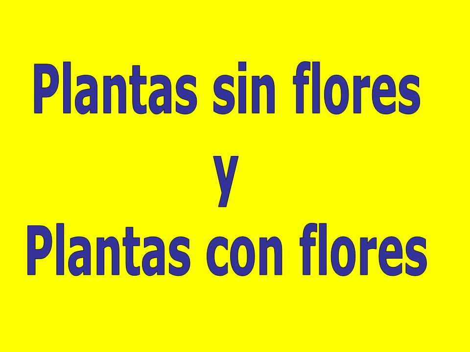 Plantas sin flores y Plantas con flores