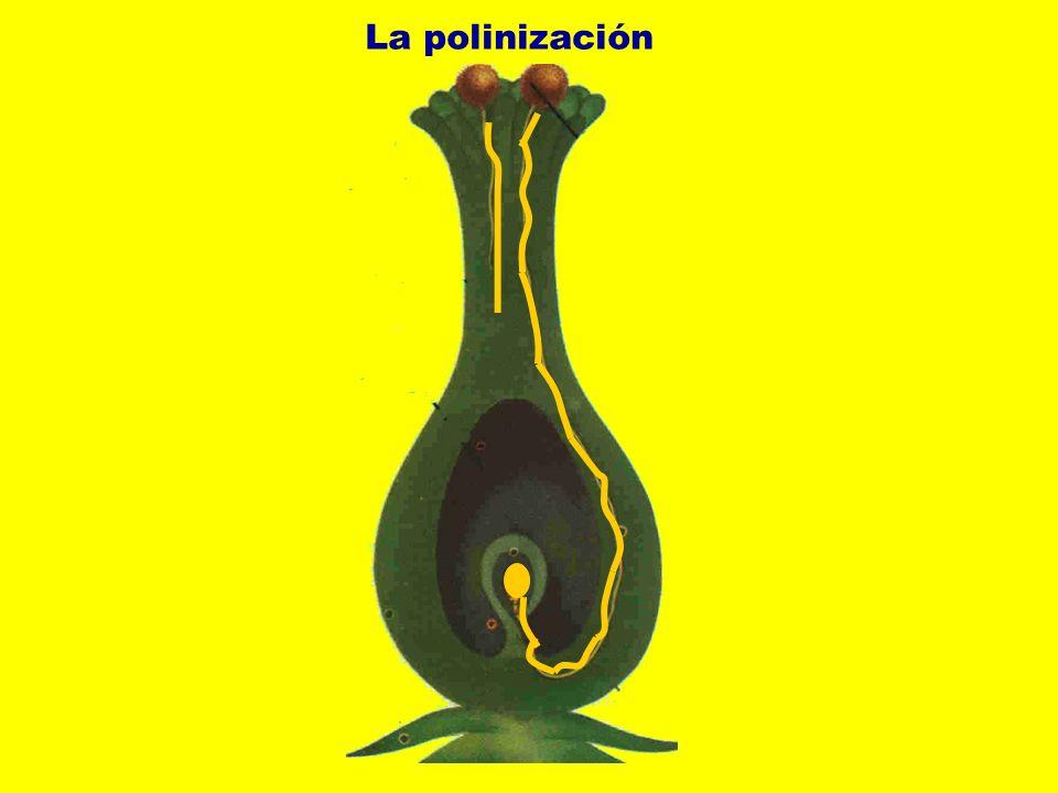 La polinización