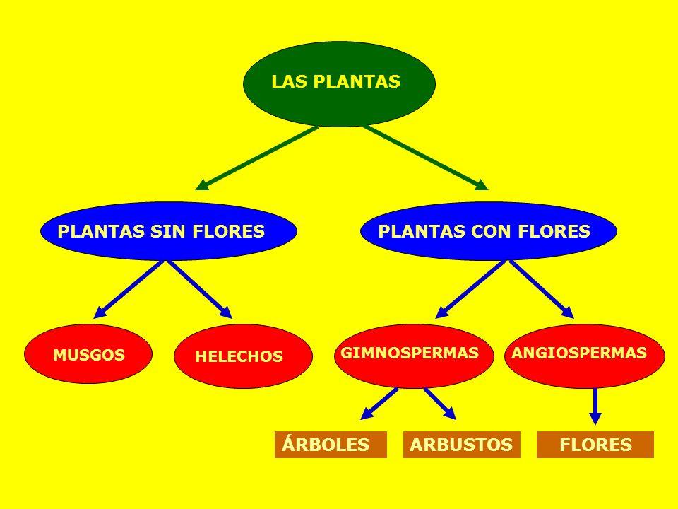 LAS PLANTAS PLANTAS SIN FLORES PLANTAS CON FLORES ÁRBOLES ARBUSTOS