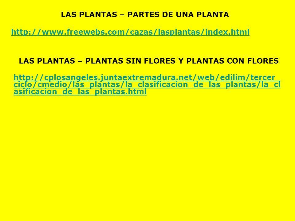 LAS PLANTAS – PARTES DE UNA PLANTA