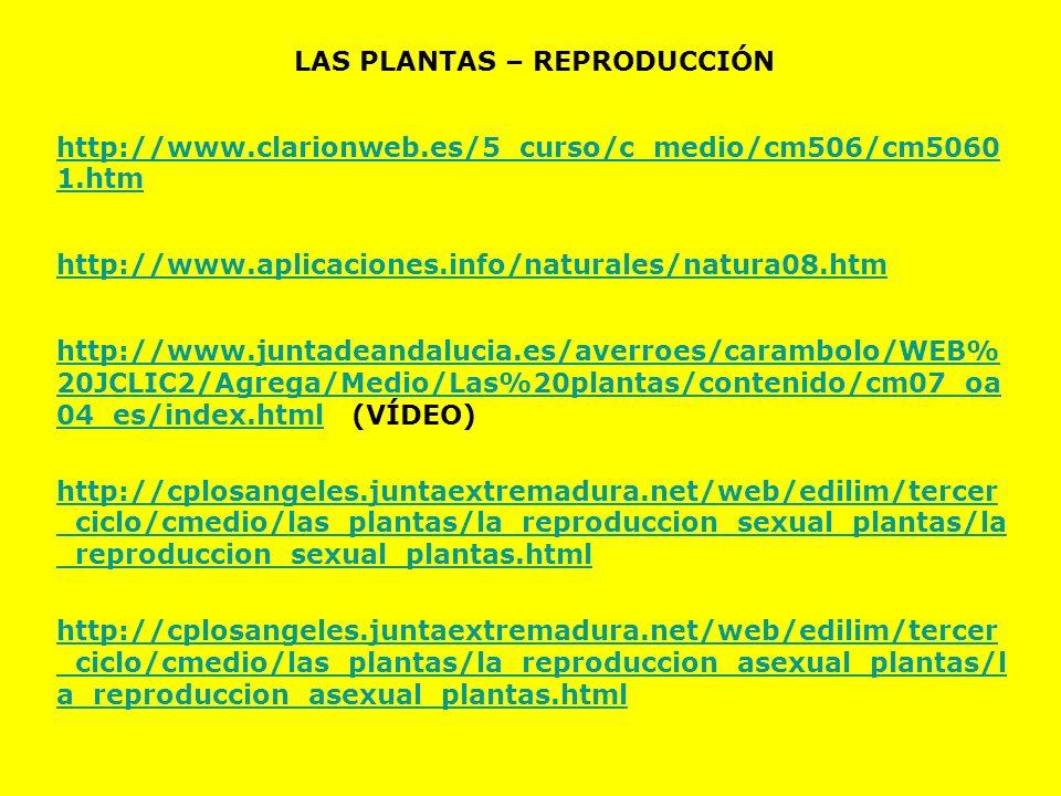 LAS PLANTAS – REPRODUCCIÓN