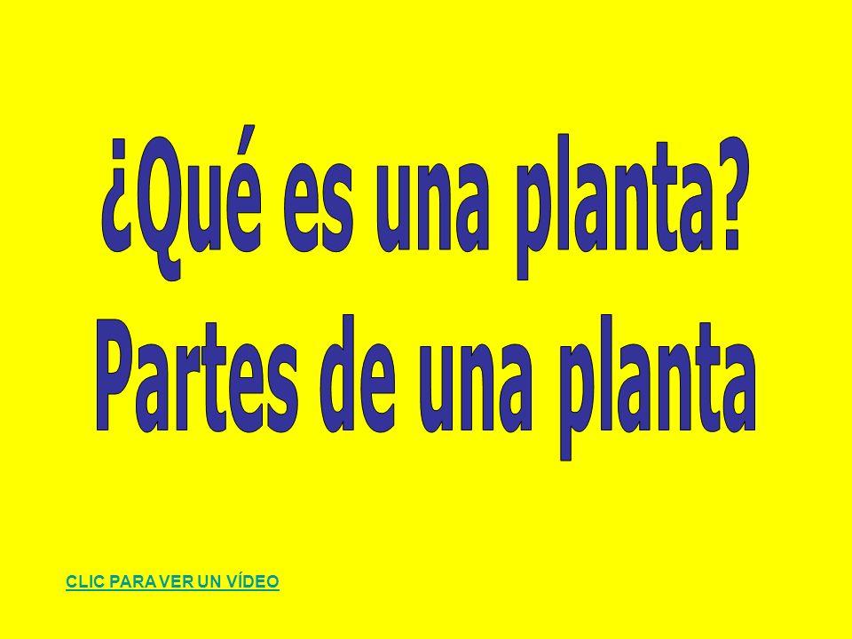 ¿Qué es una planta Partes de una planta