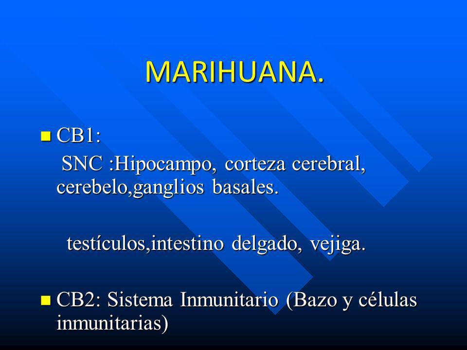 MARIHUANA. CB1: SNC :Hipocampo, corteza cerebral, cerebelo,ganglios basales. testículos,intestino delgado, vejiga.