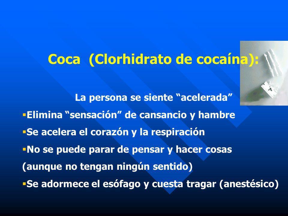 Coca (Clorhidrato de cocaína): La persona se siente acelerada