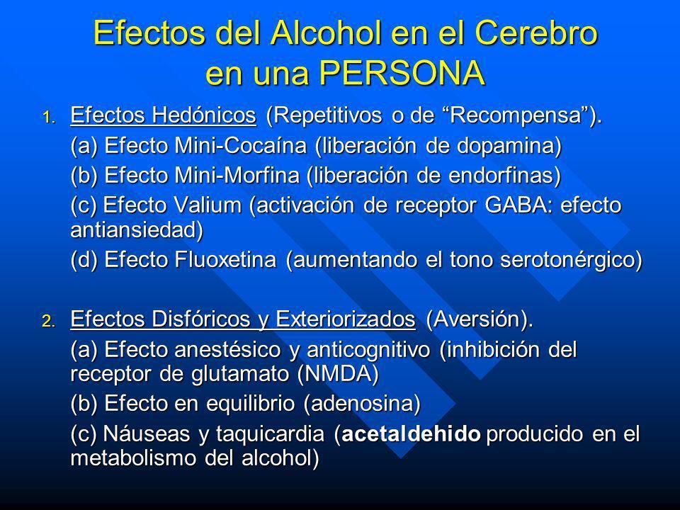 Efectos del Alcohol en el Cerebro en una PERSONA