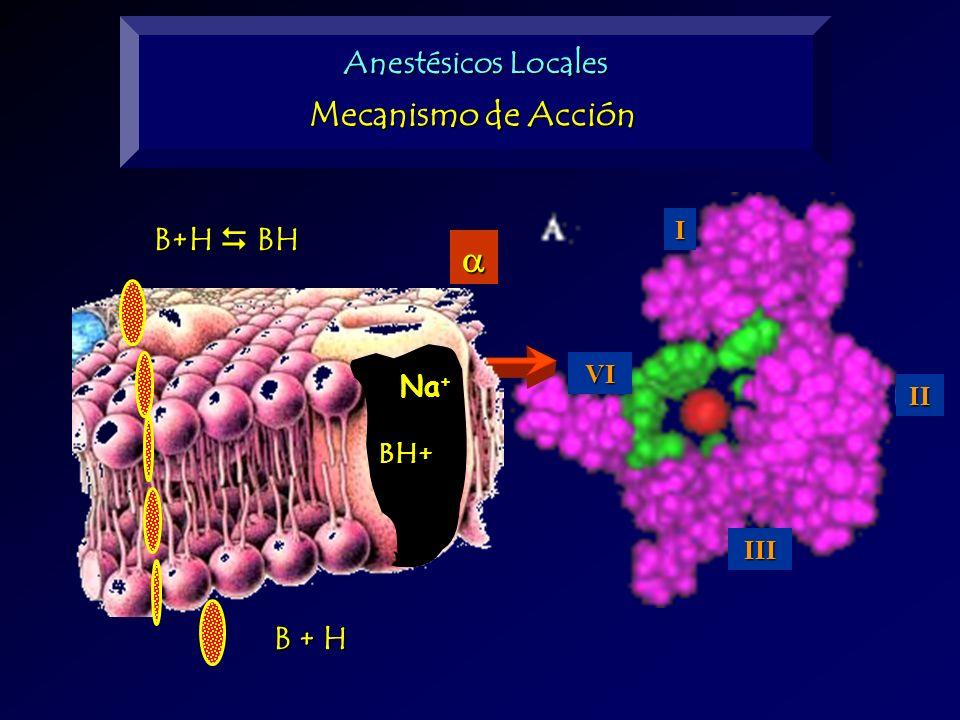 a Mecanismo de Acción Anestésicos Locales B+H  BH B + H Na+ BH+ I VI