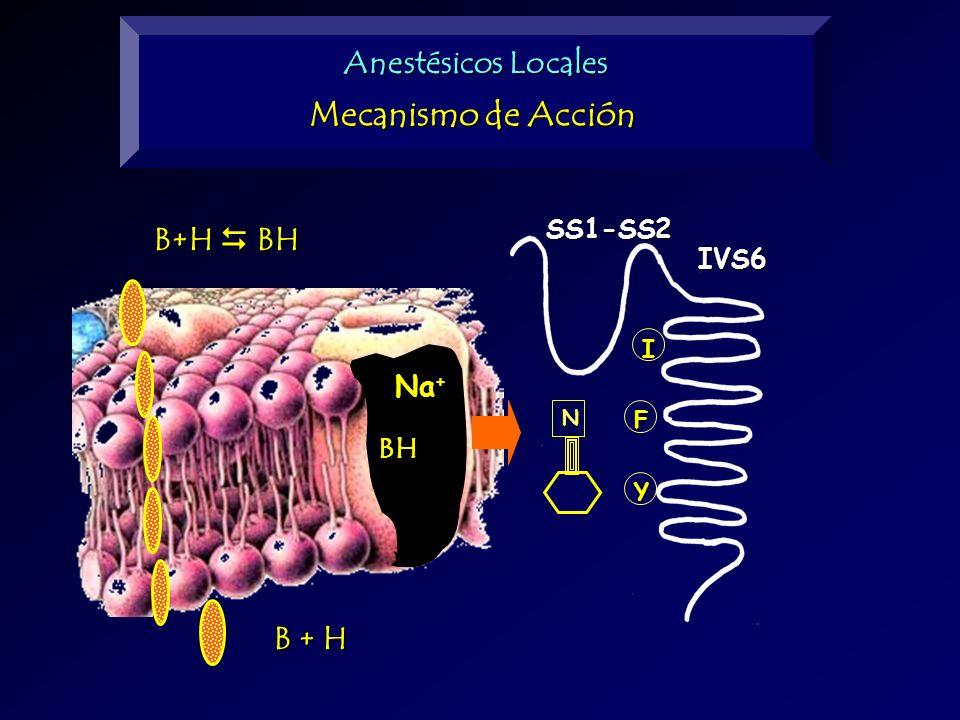 Mecanismo de Acción Anestésicos Locales B+H  BH B + H Na+ BH SS1-SS2