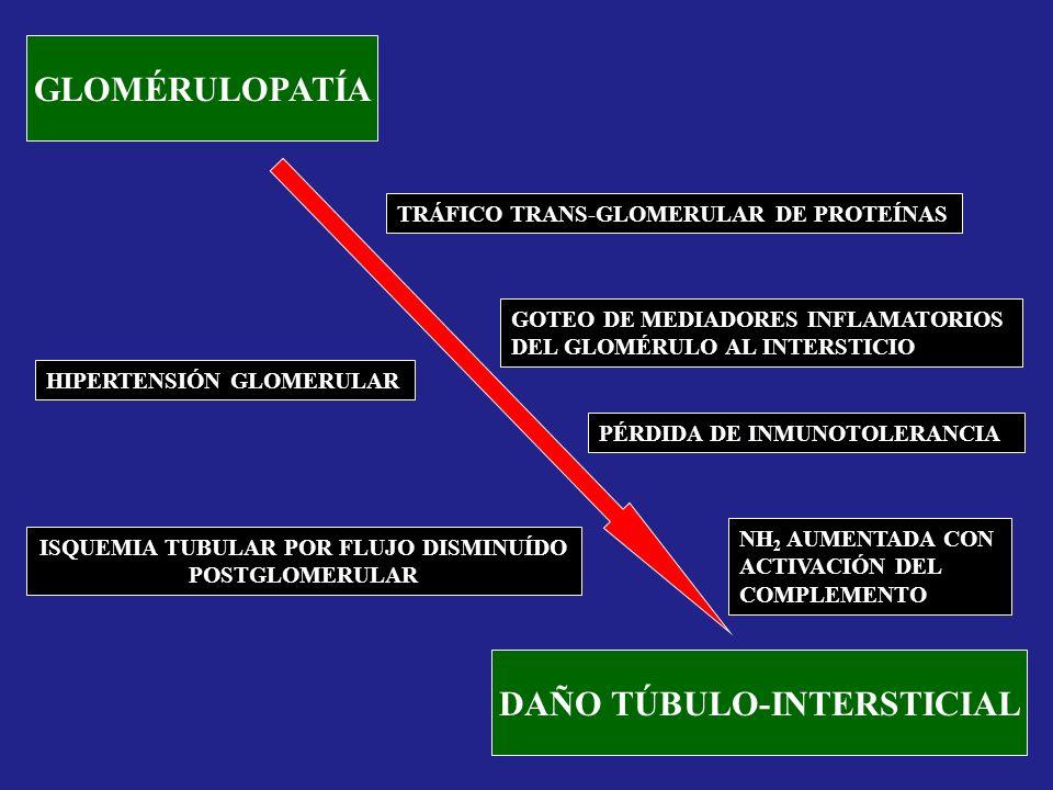 ISQUEMIA TUBULAR POR FLUJO DISMINUÍDO DAÑO TÚBULO-INTERSTICIAL