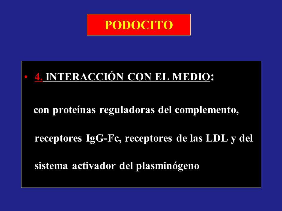 PODOCITO 4. INTERACCIÓN CON EL MEDIO: