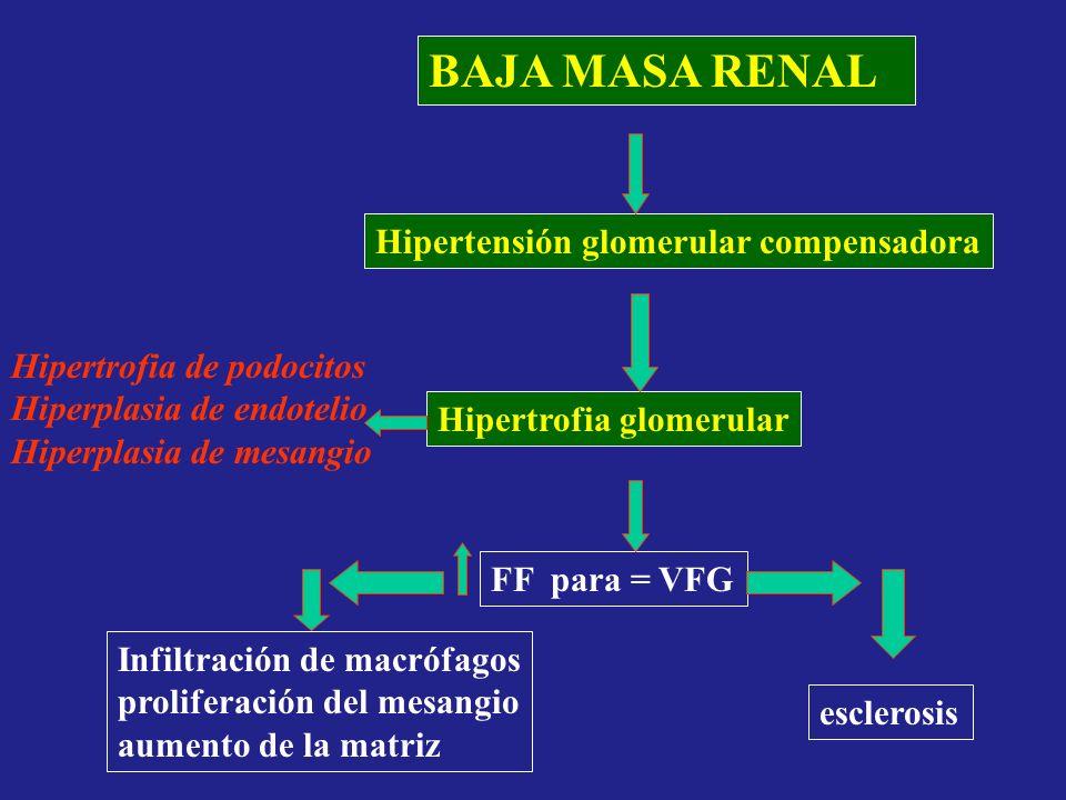 BAJA MASA RENAL Hipertensión glomerular compensadora