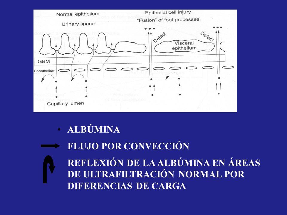 ALBÚMINA FLUJO POR CONVECCIÓN. REFLEXIÓN DE LA ALBÚMINA EN ÁREAS.