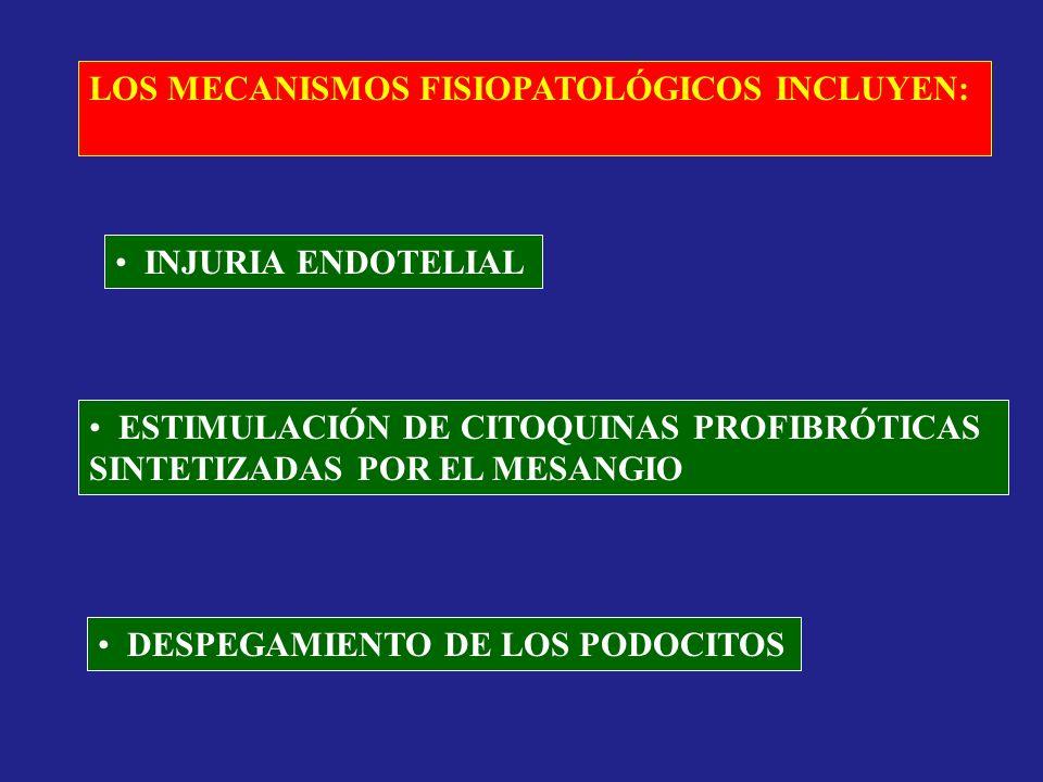 LOS MECANISMOS FISIOPATOLÓGICOS INCLUYEN: