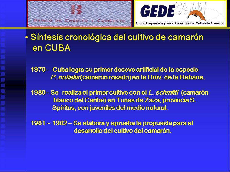 Síntesis cronológica del cultivo de camarón en CUBA