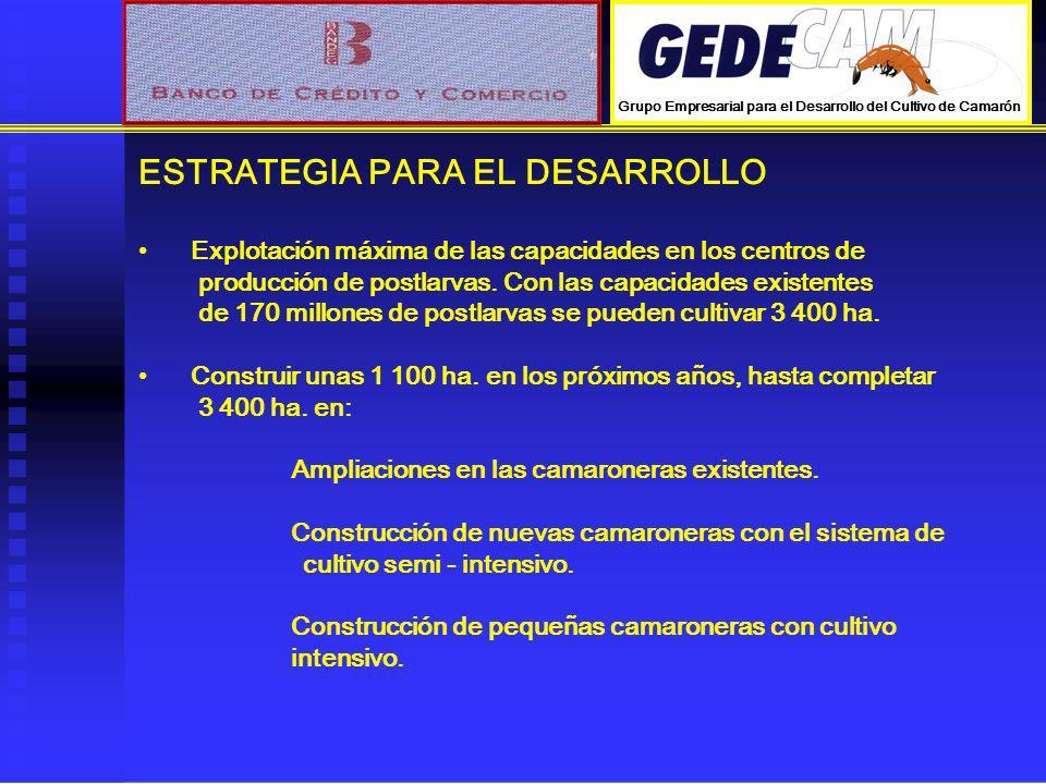 ESTRATEGIA PARA EL DESARROLLO