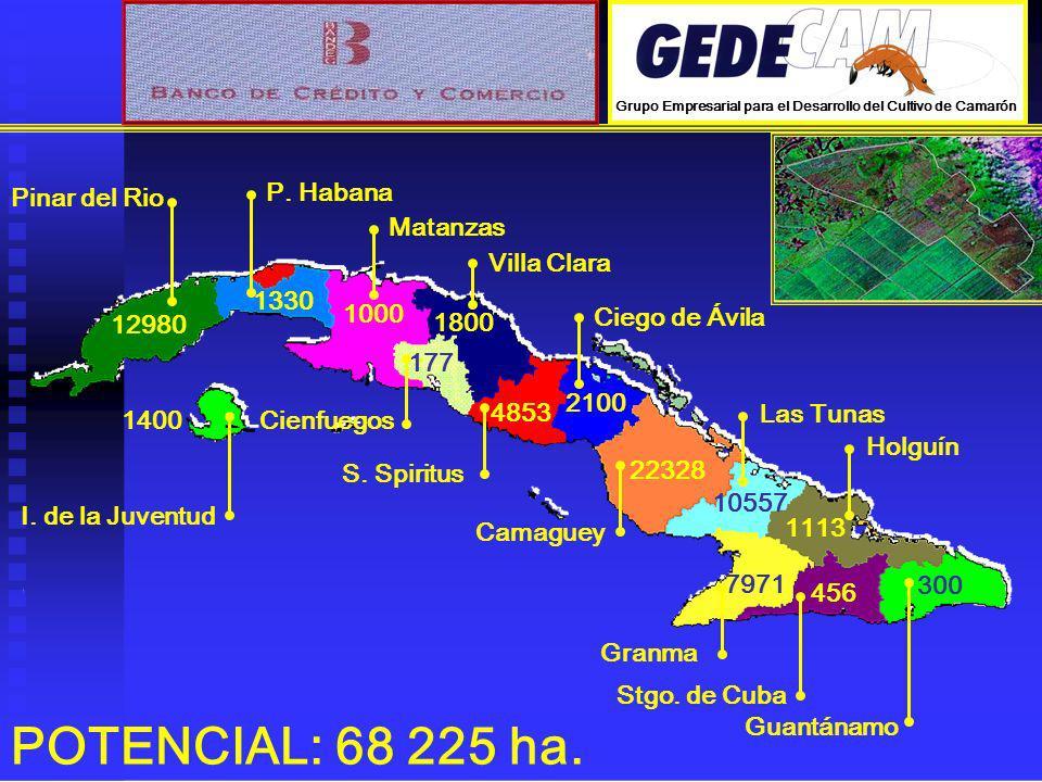POTENCIAL: 68 225 ha. Pinar del Rio P. Habana Matanzas Villa Clara