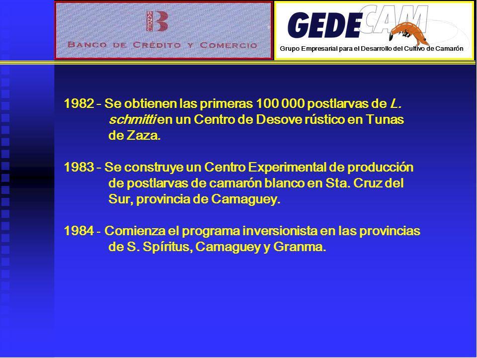 1982 - Se obtienen las primeras 100 000 postlarvas de L.