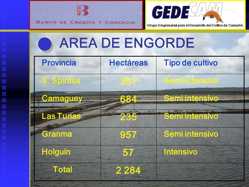 AREA DE ENGORDE 351 684 235 957 57 2 284 Provincia Hectáreas