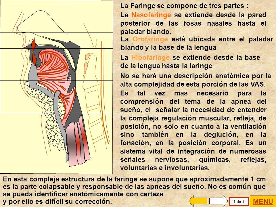La Faringe se compone de tres partes :