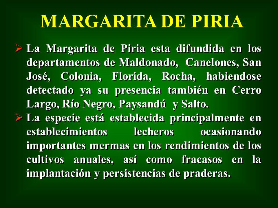 MARGARITA DE PIRIA