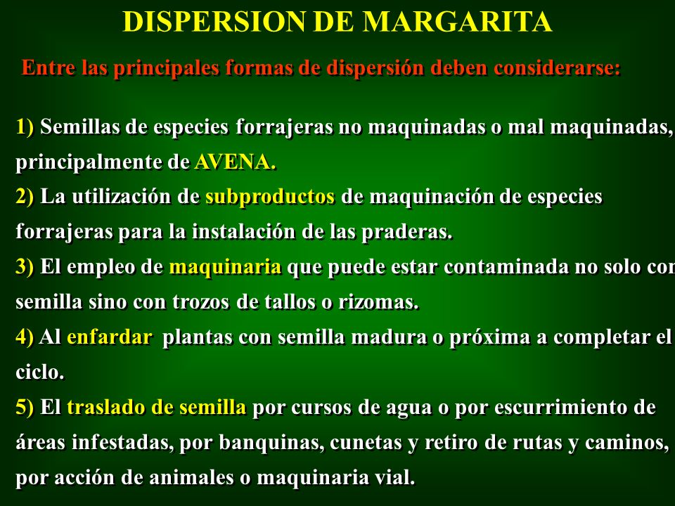 DISPERSION DE MARGARITA
