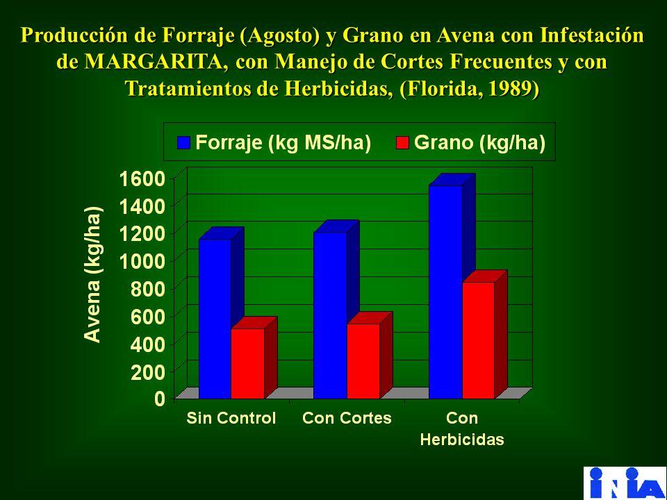 Producción de Forraje (Agosto) y Grano en Avena con Infestación de MARGARITA, con Manejo de Cortes Frecuentes y con Tratamientos de Herbicidas, (Florida, 1989)