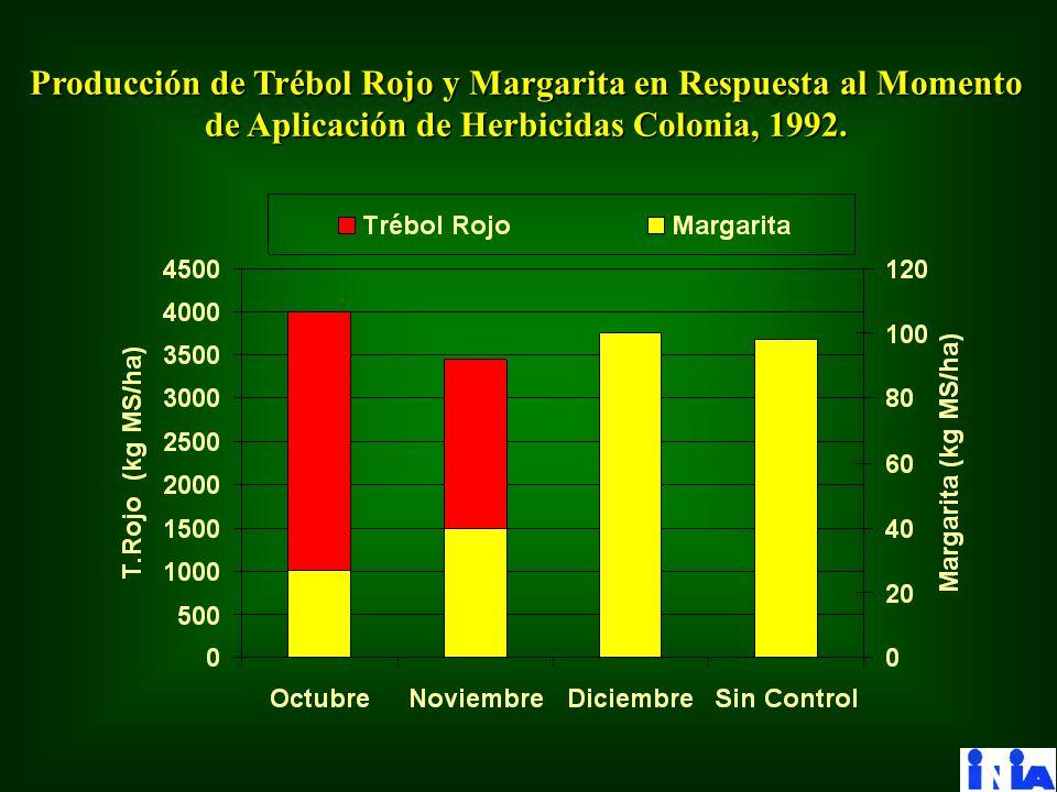 Producción de Trébol Rojo y Margarita en Respuesta al Momento de Aplicación de Herbicidas Colonia, 1992.