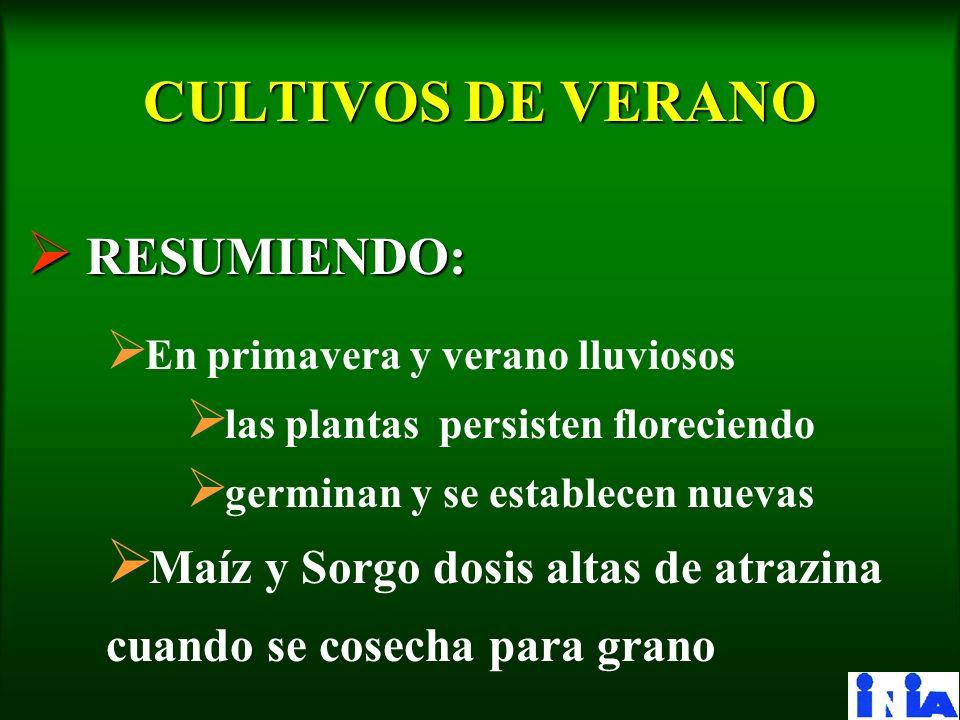 CULTIVOS DE VERANO RESUMIENDO:
