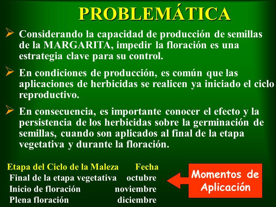 PROBLEMÁTICA Considerando la capacidad de producción de semillas de la MARGARITA, impedir la floración es una estrategia clave para su control.