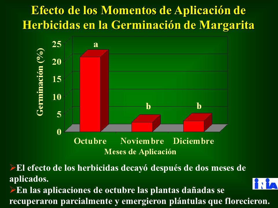 Efecto de los Momentos de Aplicación de Herbicidas en la Germinación de Margarita