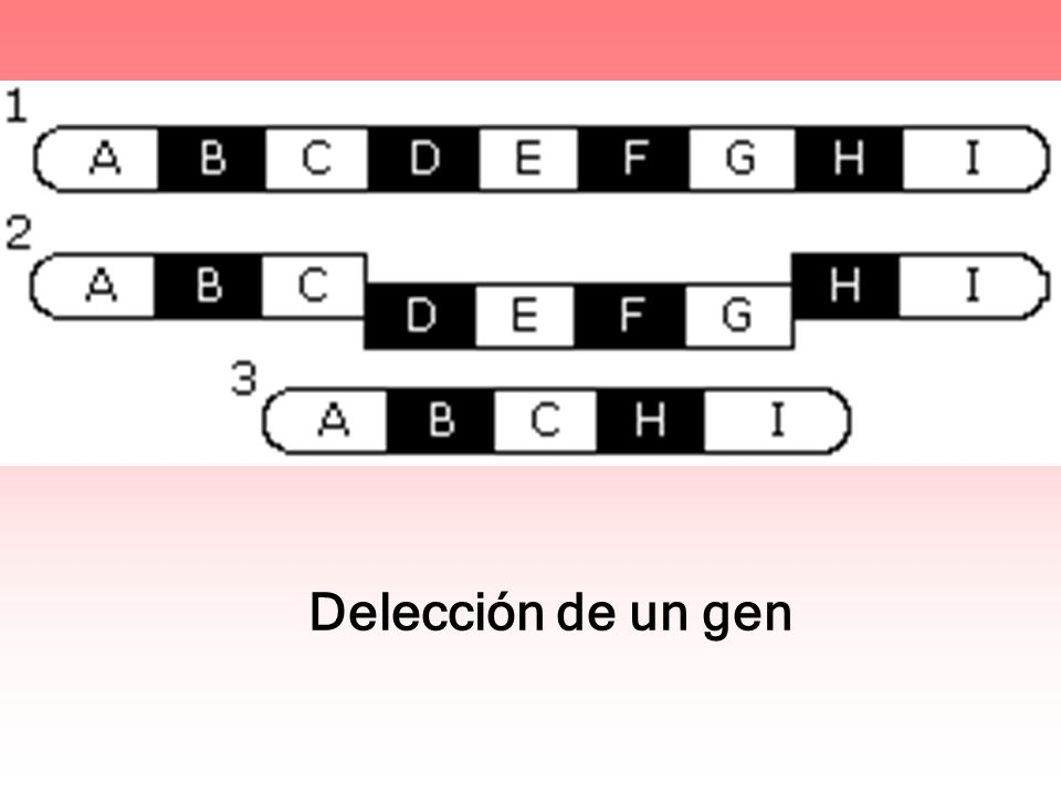 Delección de un gen