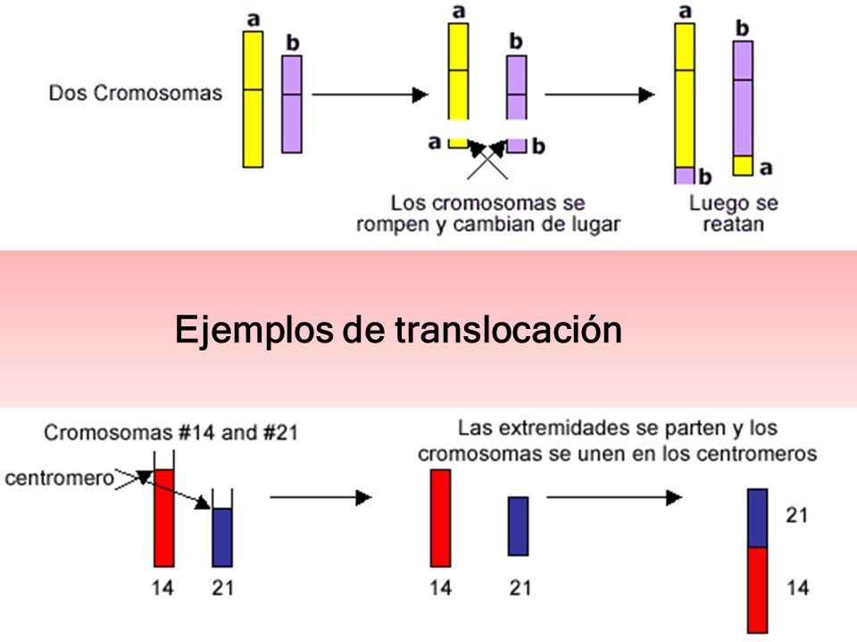 Ejemplos de translocación