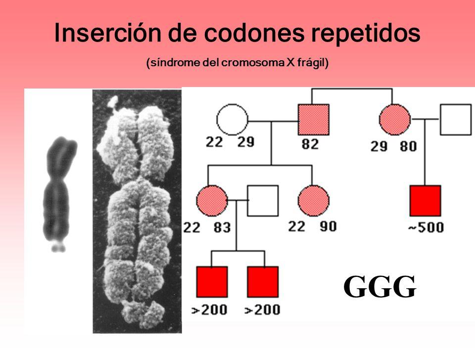 Inserción de codones repetidos (síndrome del cromosoma X frágil)