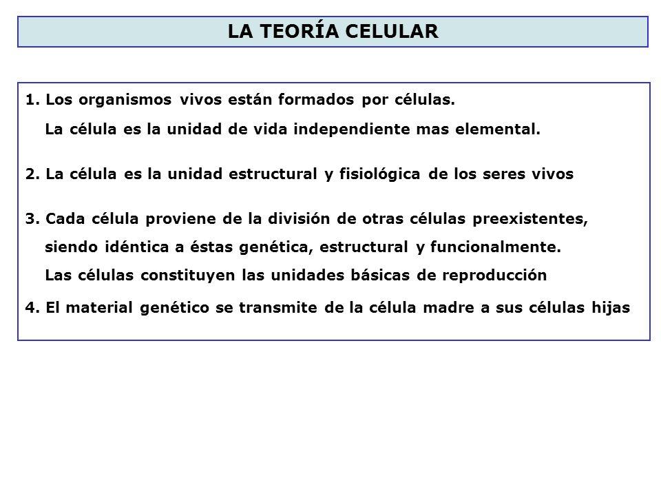 LA TEORÍA CELULAR 1. Los organismos vivos están formados por células.