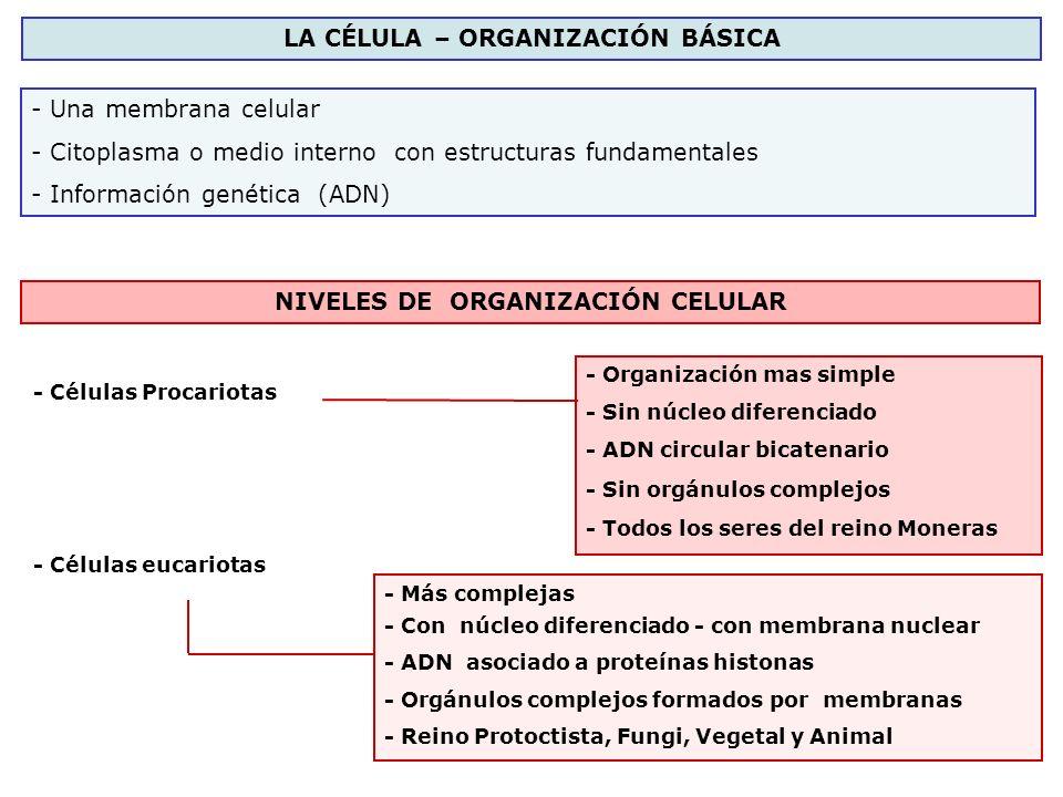 LA CÉLULA – ORGANIZACIÓN BÁSICA NIVELES DE ORGANIZACIÓN CELULAR