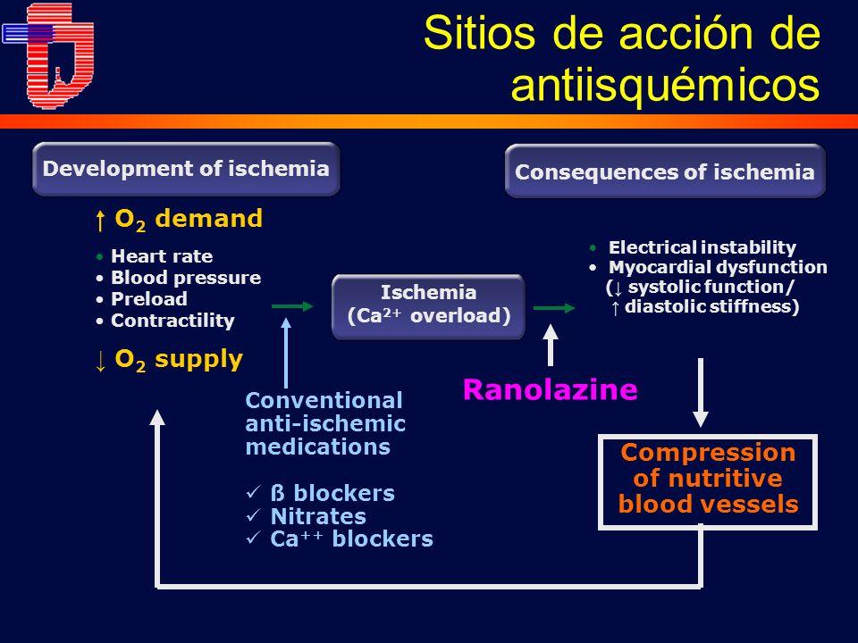 Sitios de acción de antiisquémicos