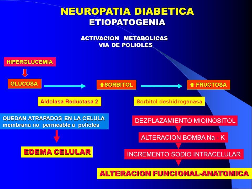 ACTIVACION METABOLICAS