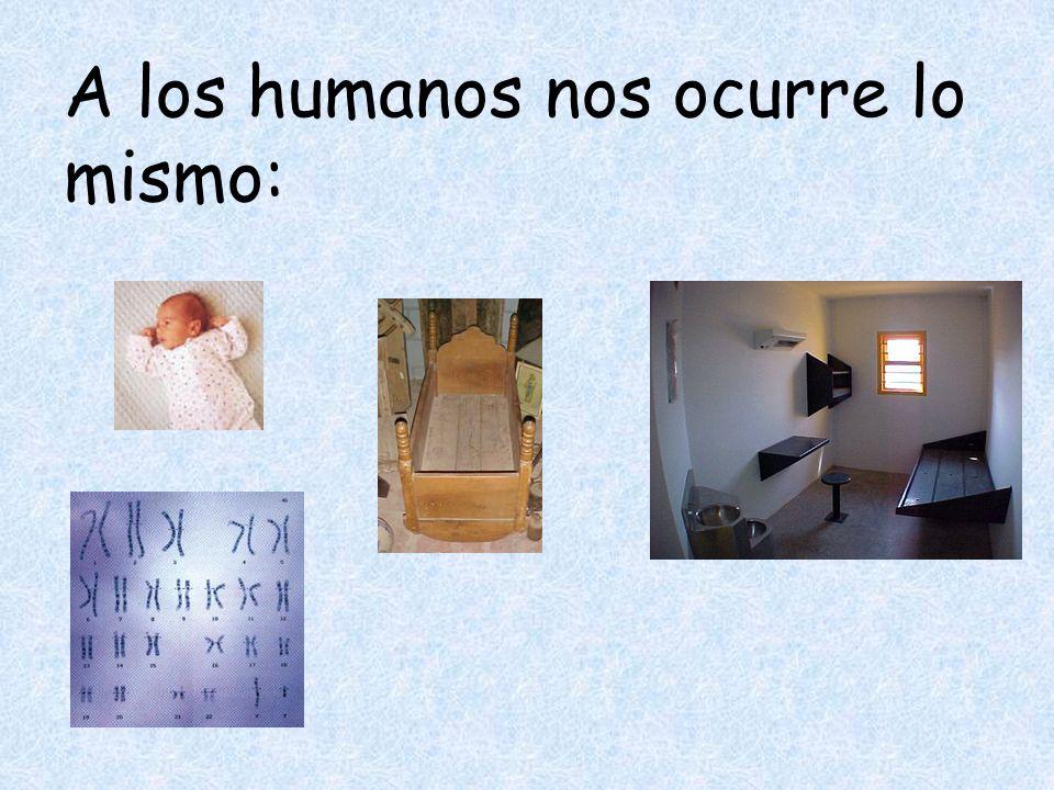 A los humanos nos ocurre lo mismo: