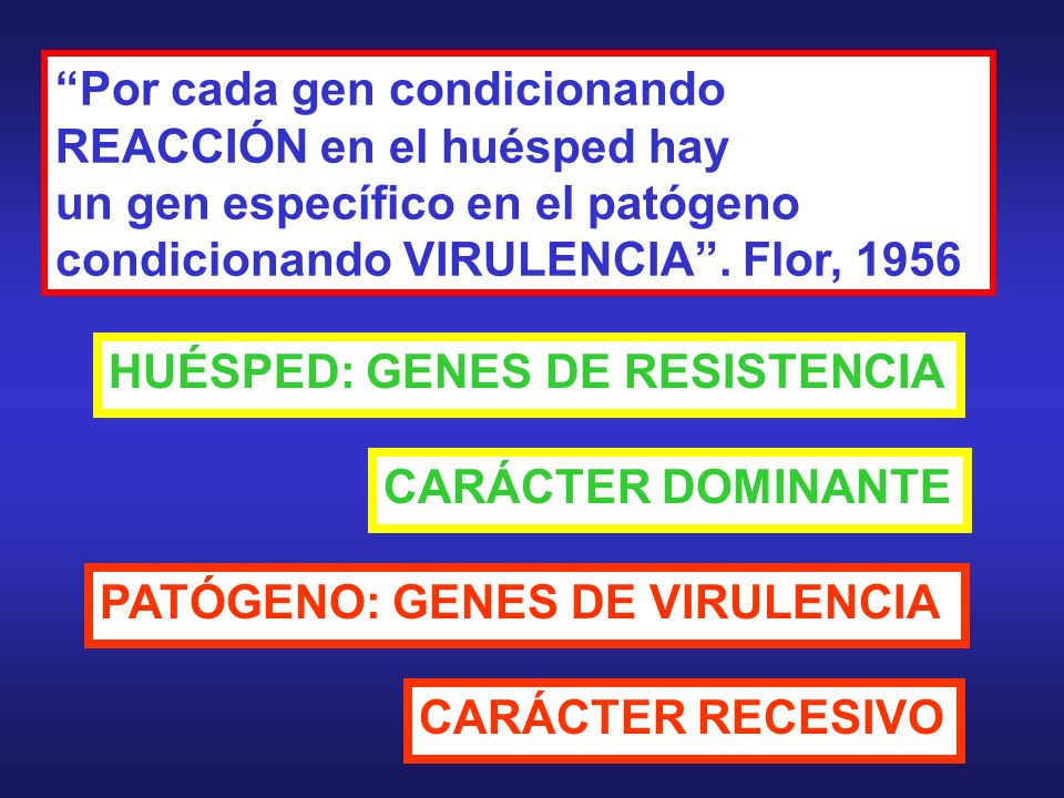 Por cada gen condicionando REACCIÓN en el huésped hay un gen específico en el patógeno condicionando VIRULENCIA . Flor, 1956