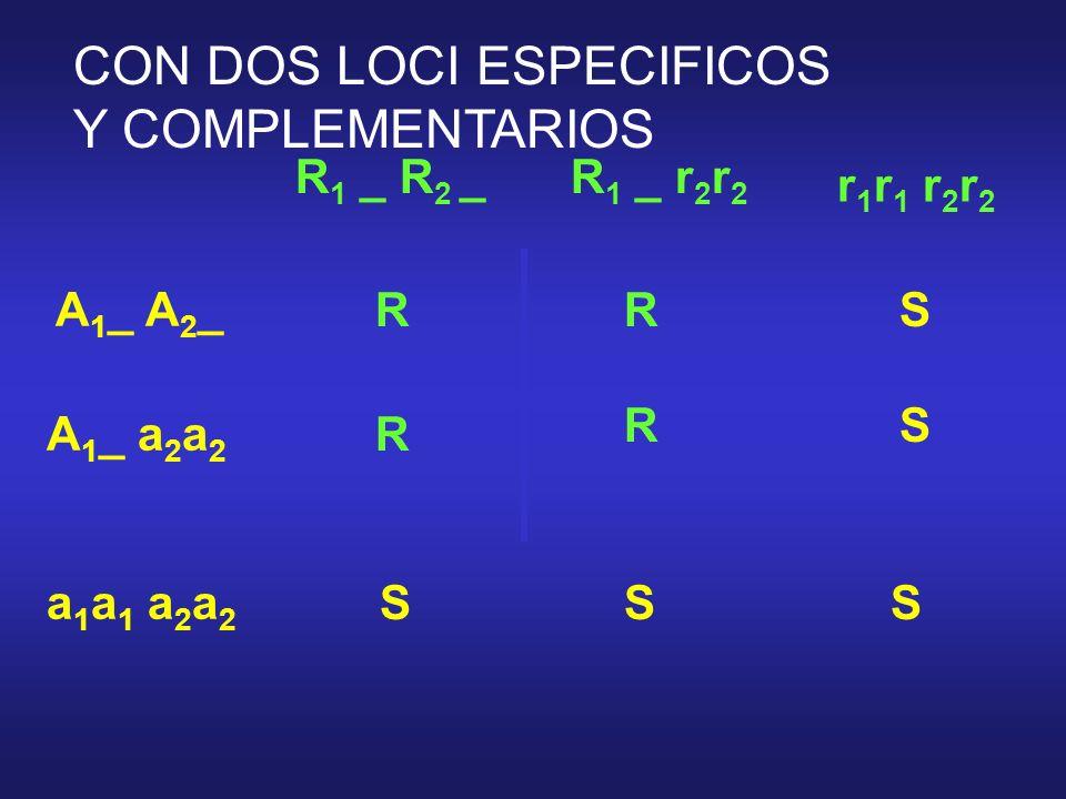 CON DOS LOCI ESPECIFICOS Y COMPLEMENTARIOS