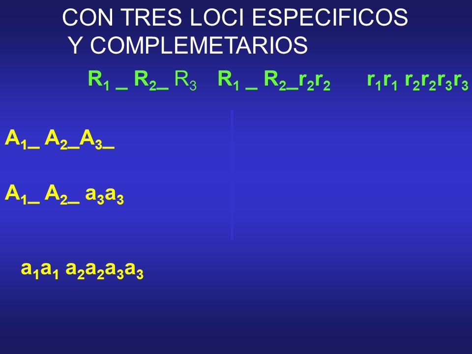 CON TRES LOCI ESPECIFICOS Y COMPLEMETARIOS