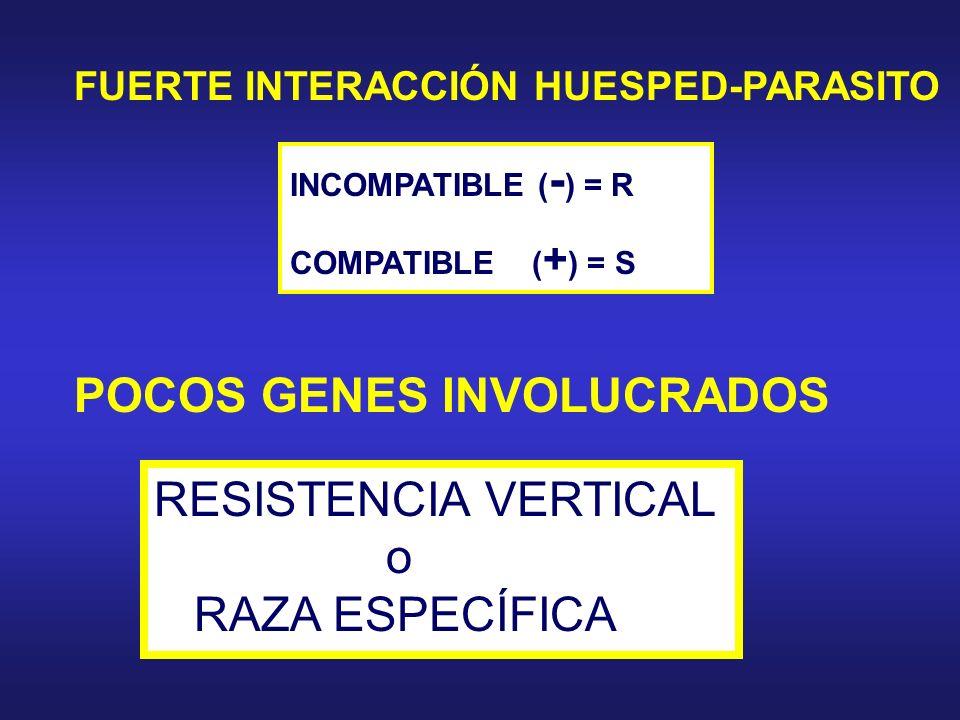 POCOS GENES INVOLUCRADOS