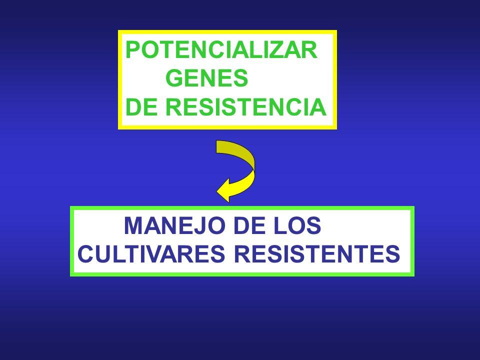 POTENCIALIZAR GENES DE RESISTENCIA MANEJO DE LOS CULTIVARES RESISTENTES