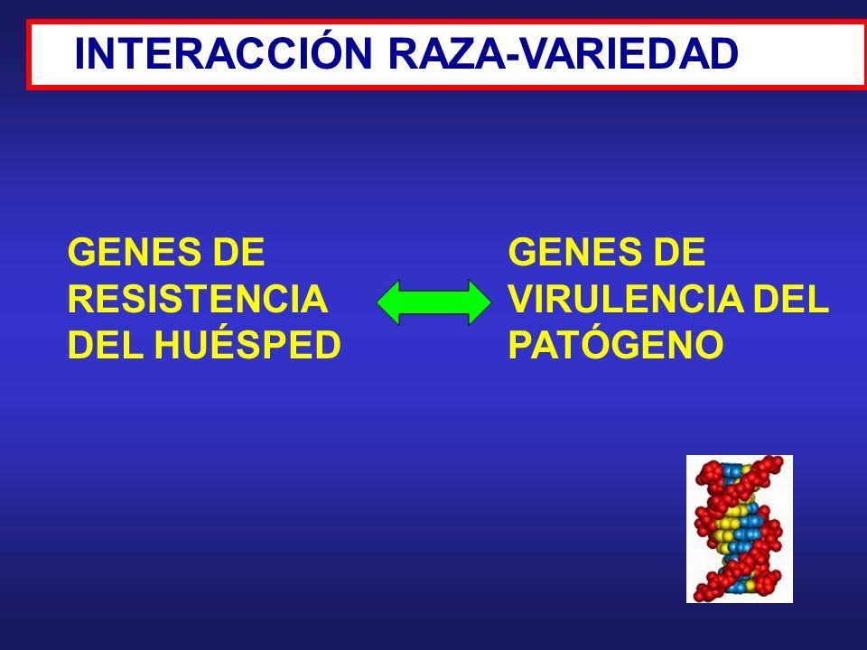 INTERACCIÓN RAZA-VARIEDAD