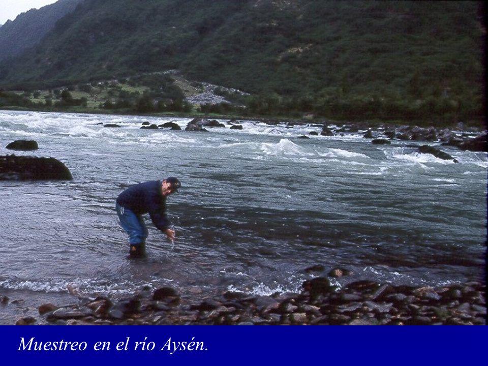 Muestreo en el río Aysén.