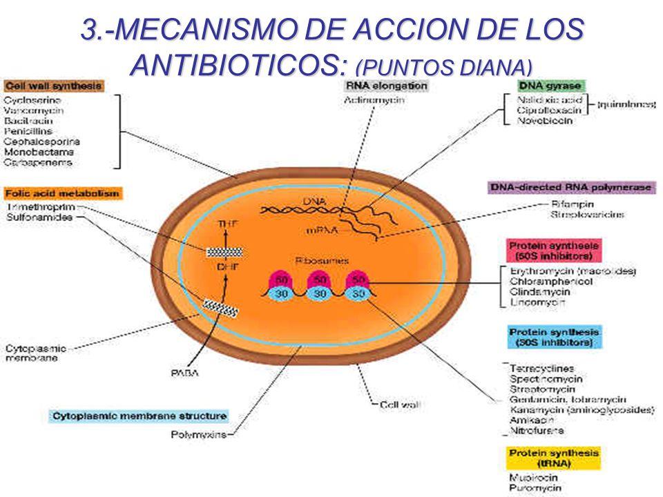 3.-MECANISMO DE ACCION DE LOS ANTIBIOTICOS: (PUNTOS DIANA)