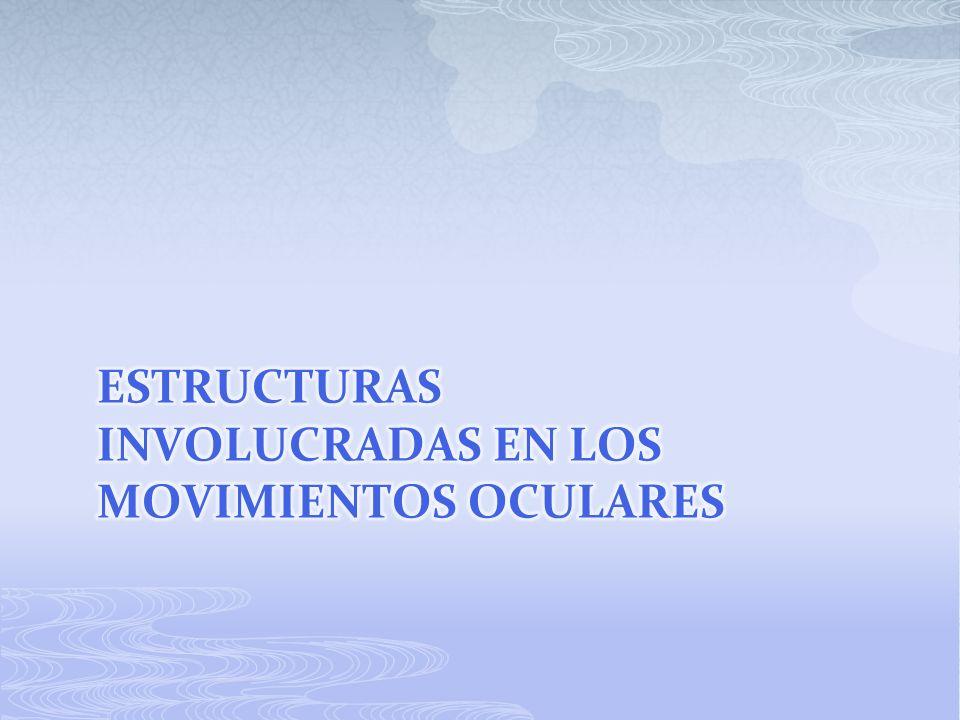 Estructuras involucradas en los movimientos oculares