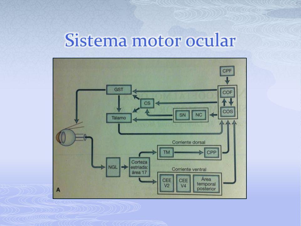 Sistema motor ocular