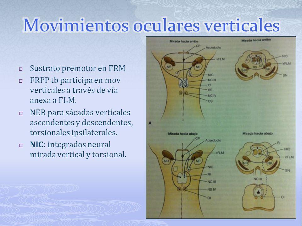 Movimientos oculares verticales