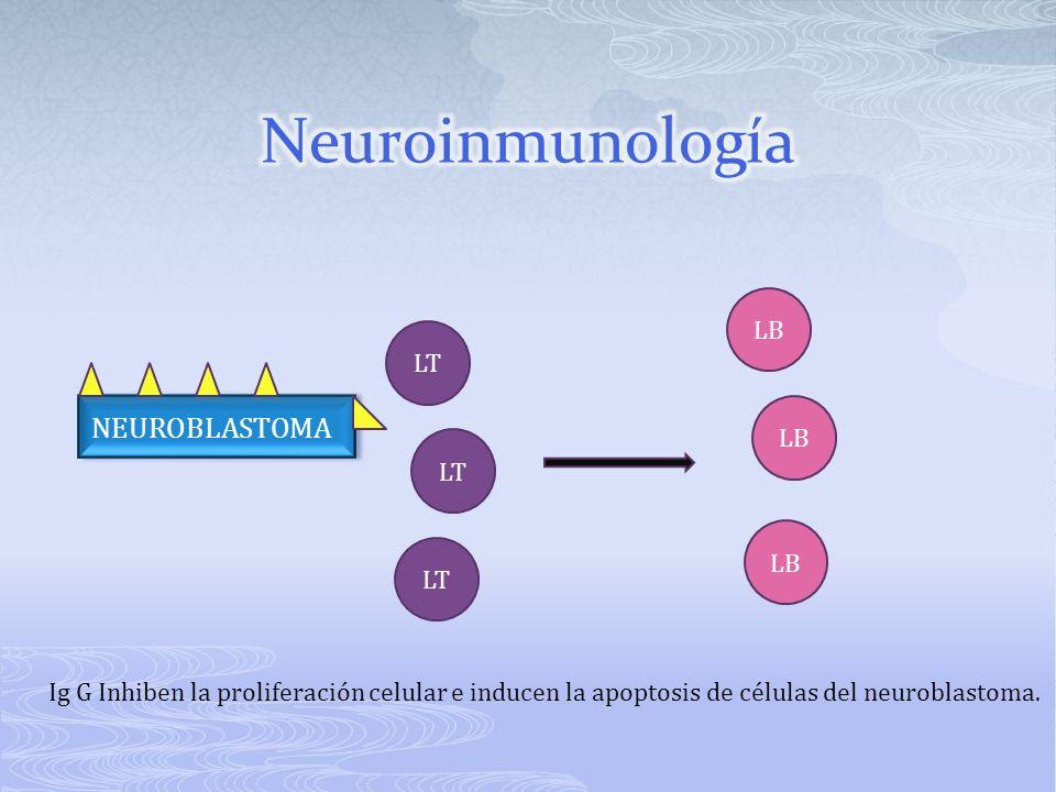 Neuroinmunología NEUROBLASTOMA LB LT LB LT LB LT